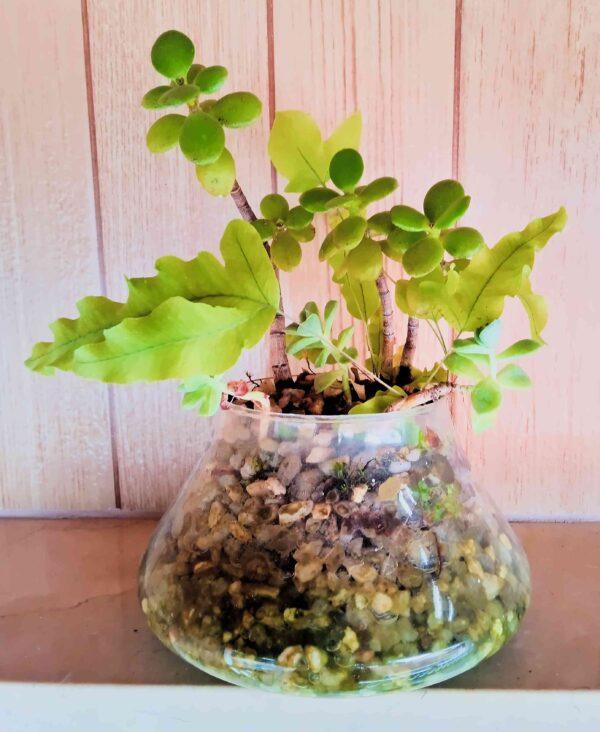 plantas-variadas
