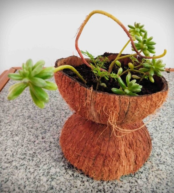 plantas-mistura-de-suculentas