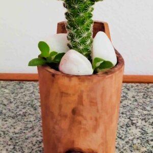 planta-cacto-dedal
